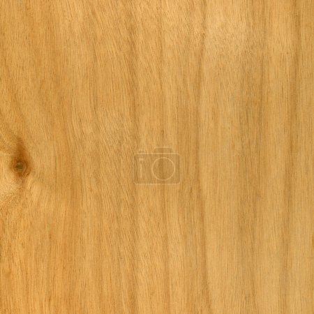 Texture of okoume marine plywood