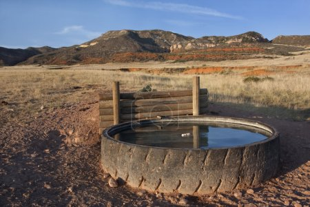 Cattle watering hole in Colorado