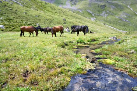 Horses at meadow near stream, Caucasus