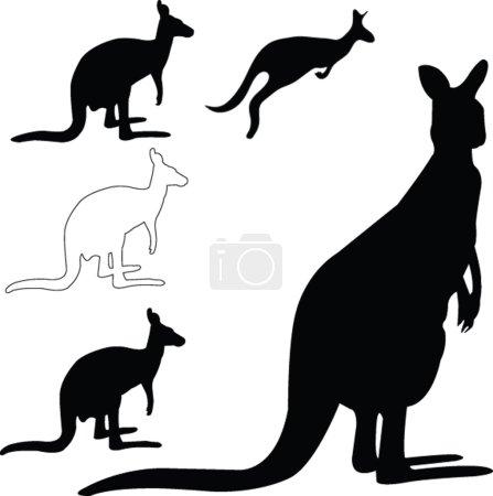 Kangaroo collection