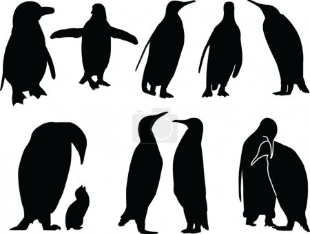 Penguins silhouette collection