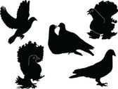 Pigeons collection