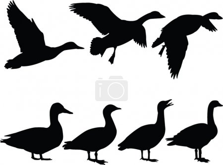 Wild duck silhouette collection