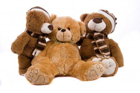 Photo for Teddy bear stodui shot - Royalty Free Image