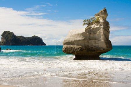 Cathedral Cove Beach, Coromandel, North Island, Ne...