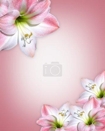 Photo pour Composition de fleurs d'Amaryllis sur fond rose tendre pour invitation de mariage, fête des mères ou fête avec espace copie image et illustration. - image libre de droit