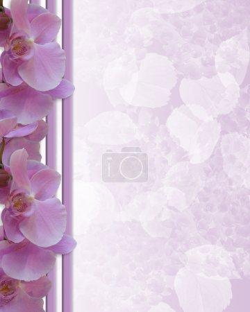 Photo pour Orchidées de lavande, srtipes, arrière-plan, bordure florale, invitation de mariage ou du modèle avec espace copie - image libre de droit