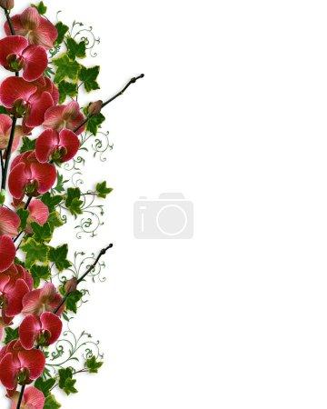 Photo pour Lierre et orchidées image et illustration composition pour invitation de mariage de fond frontière image ou modèle avec espace copie. - image libre de droit