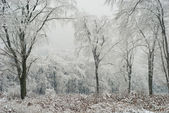 "Постер, картина, фотообои ""Зимний лес"""