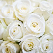 White Rose Background...