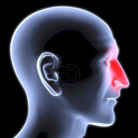 Photo pour Tête d'un homme sous les rayons x. nez est surlignée en rouge. - image libre de droit