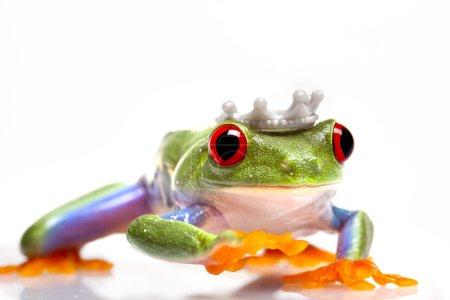 Frog Princess!