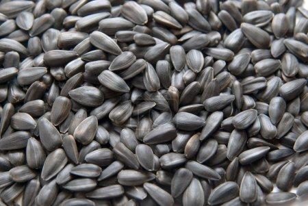Photo pour Gros plan sur les graines de tournesol. texture fond - image libre de droit