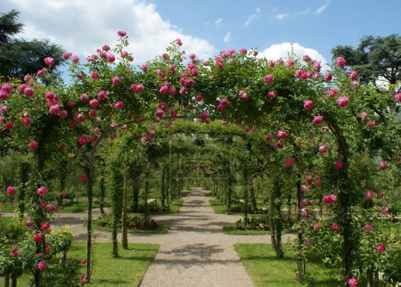 Photo for Roses pergola in a french garden - Royalty Free Image