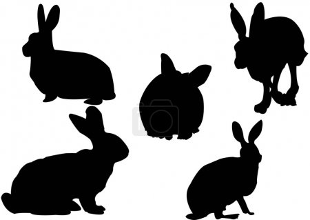 Bunny colection