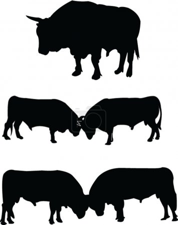 Bulls silhouette collection