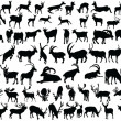 Wild animal collection - vector...