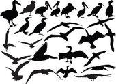 Sea birds collection