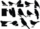 Dicky birds collection