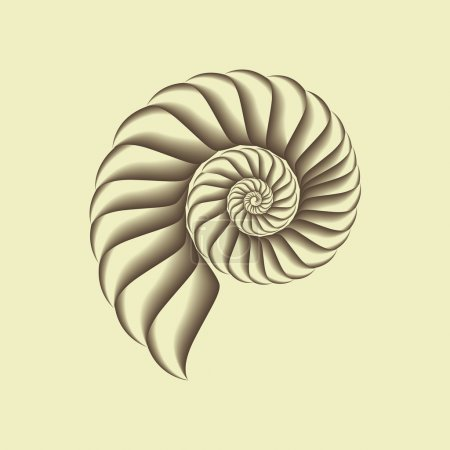 Illustration for A vector shell. - Royalty Free Image