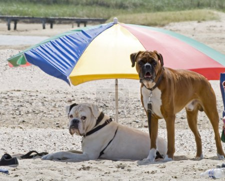 Dogs on a holiday