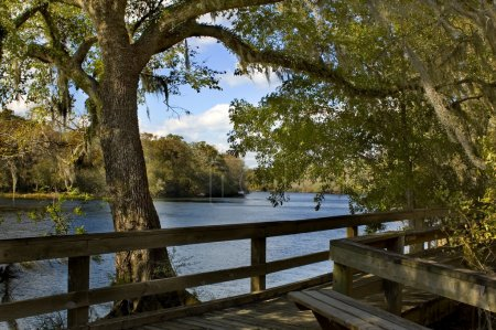 Suwannee River Boardwalk