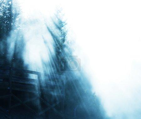 Photo pour Forêt enchantée de brumeux - image libre de droit