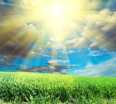 Photo pour Terres herbeuses - image libre de droit