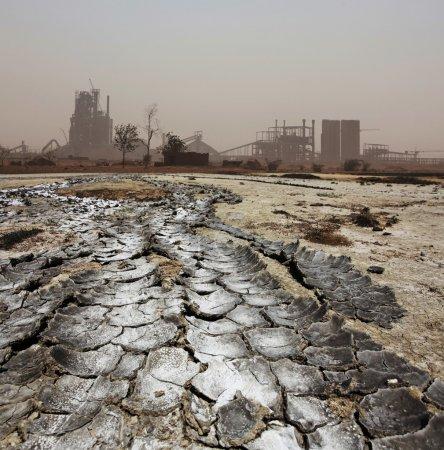 Photo pour Planter dans le désert - image libre de droit