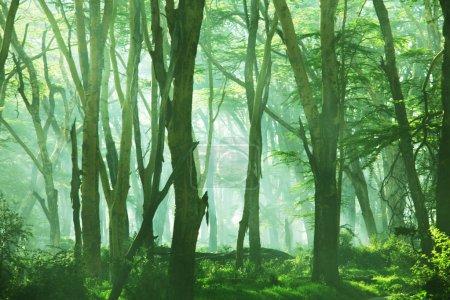 Photo pour Forêt pluviale - image libre de droit