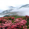 Misty spring mountain with azelea flowers and bush...