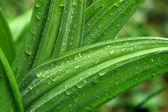 gouttes de pluie sur les feuilles vertes