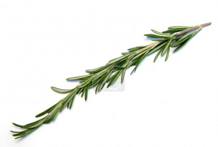 Photo for Rosemary on a white background - Royalty Free Image