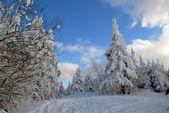 Winter forest of Carpathians