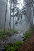 The mountain river in foggy wood