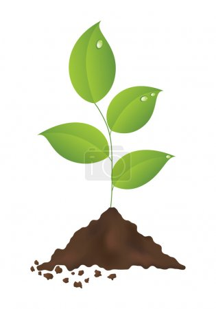 Illustration for Green plant isolated on a white background. Vector illustration. - Royalty Free Image