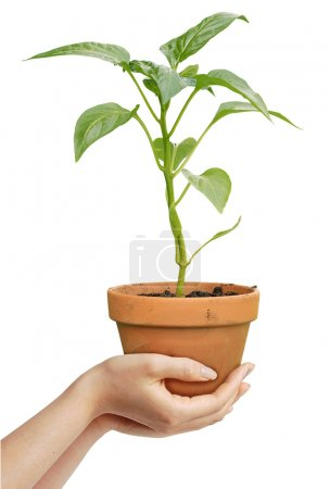 Human hands holding a growing plant