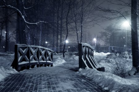 Photo for Winter park at night. Frosty winter in dark park. - Royalty Free Image