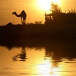 A camel silhouette with the low Sun behind it, nex...