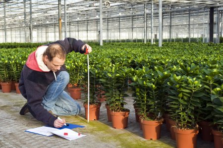Measuring the height of plants
