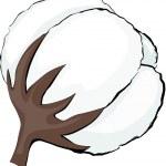 Cotton. Element for design vector illustration....
