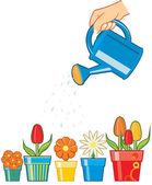Hand watering flowers