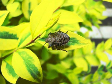 Photo pour Gros plan d'un bug sur un fond flou - image libre de droit