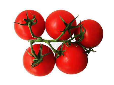 Photo for Tomatoes on a branch on a white background - Royalty Free Image