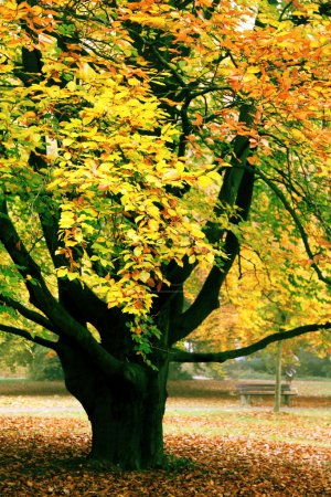 Photo for Tree in orange foliage and a green grass - Royalty Free Image