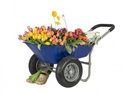 Wheelbarrow of flowers
