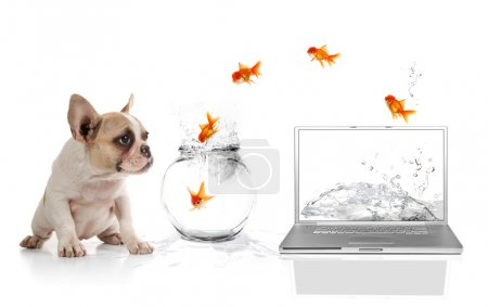 Cute Puppy Watching Goldfish Escaping th