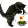 Black Cat Reaching Into Fishbowl With a Shocked Sc...