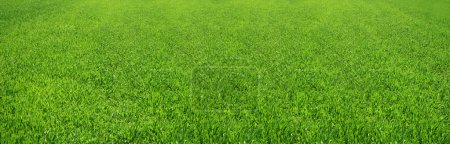 Photo for Great image of a nice green field of grass - Royalty Free Image