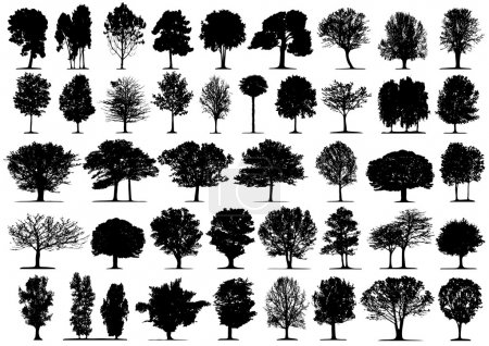 Illustration for Black tree silhouettes on white background. Vector illustration. - Royalty Free Image